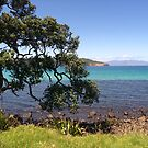 The Pohutukawa Tree on the Shoreline.......!! by Roy  Massicks