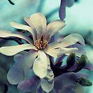 Magnolia's Beauty - Ein Frühlingsangebot von Evita