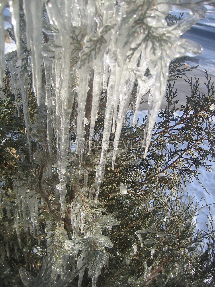 ice on our tree by LINDA DEVLIN