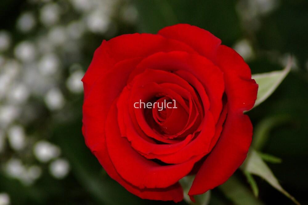 Red Velvet by cherylc1