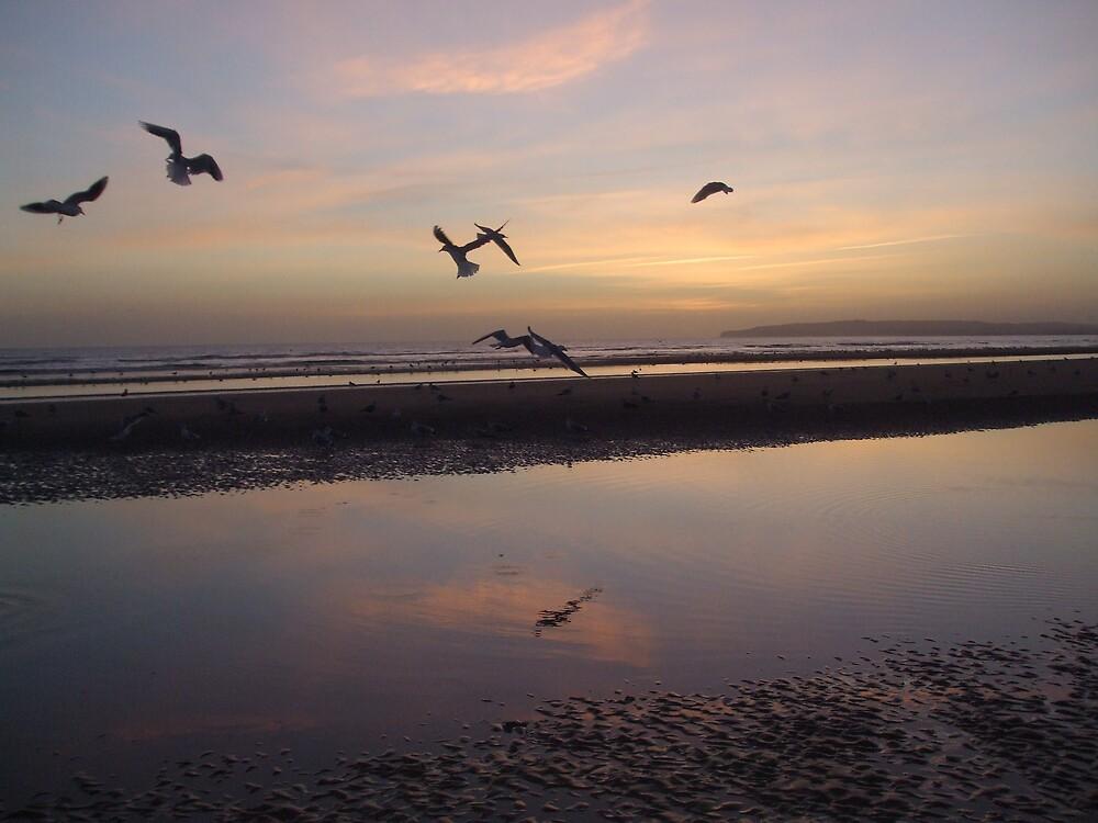 Birds fly away by Deirdre Banda
