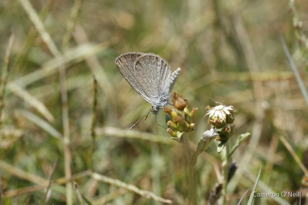 Moth feeding by Cameron O'Neill