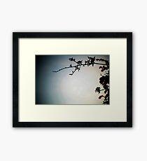 Tree & Sky Framed Print