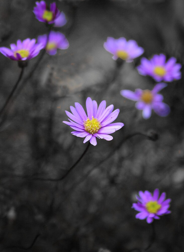 Daisies by Mikester