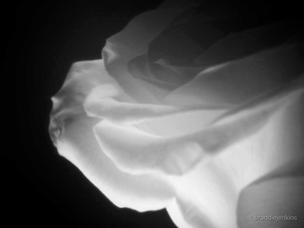 Illuminate by brandiejenkins