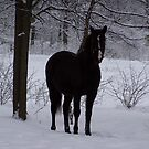 Horse Black by UncleBud