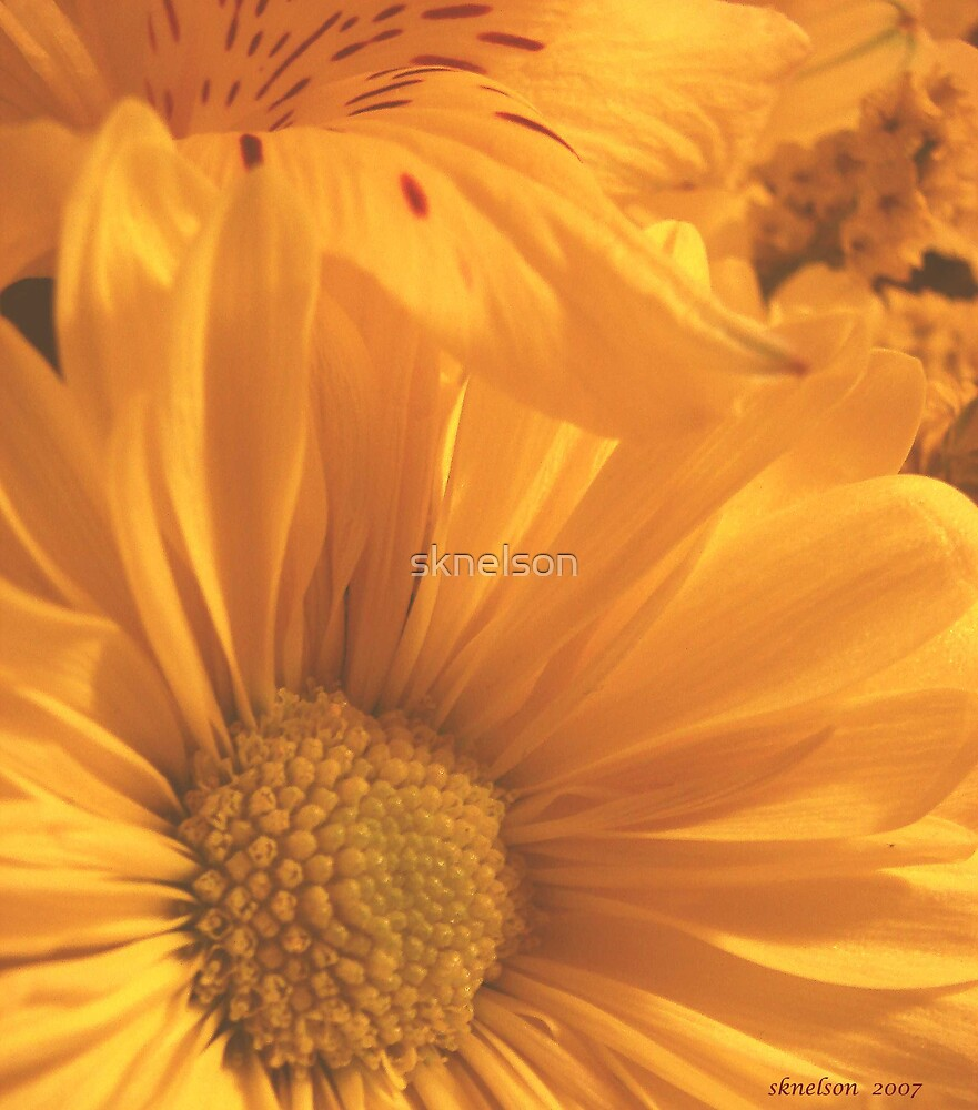 Yellow Profusion by sknelson