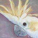 Sulphur-crested cockatoo by Glenda Jones