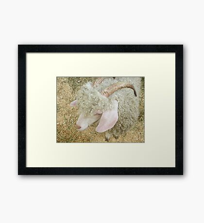 Country Fair Friends Framed Print
