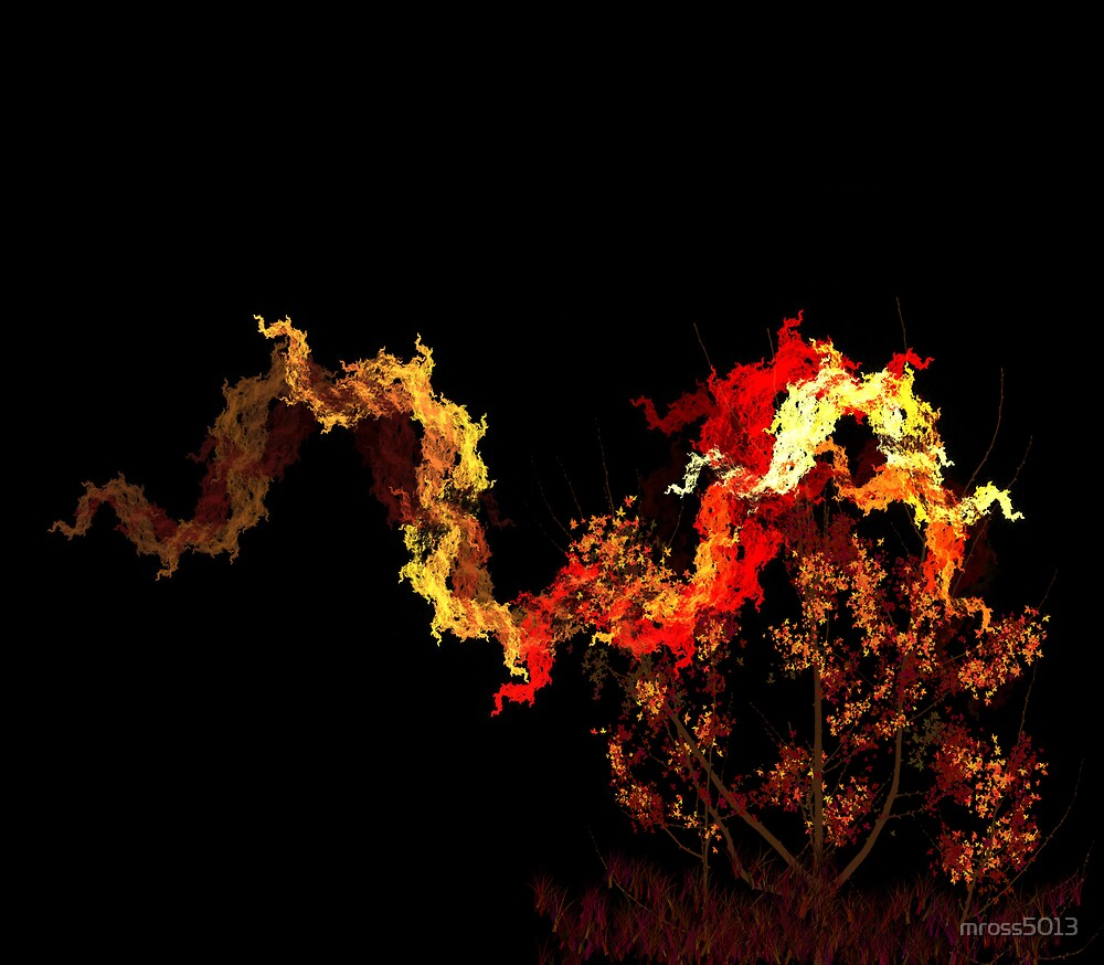 May 2008 - Flame by mross5013