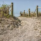 Path to the Beach  by John  Kapusta