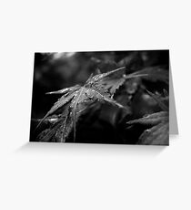 Japanese Maple Leaves after rain Greeting Card