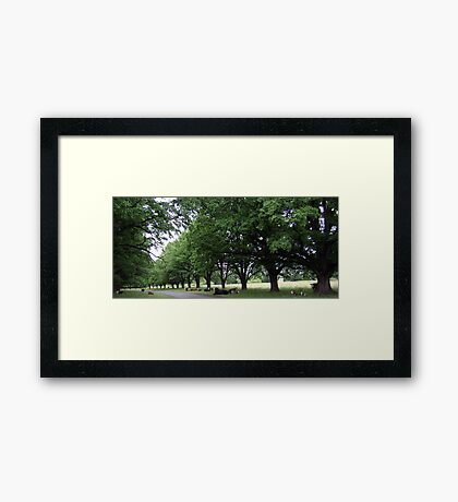 Bovine Avenue - Gostwyck, Northern Tablelands, NSW, Australia Framed Print