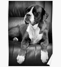 Missing you - Boxer Dogs Series Poster