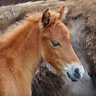 Little Rust Color Foal by Karen Peron