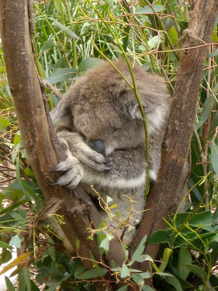 Koala Moment by Blaise