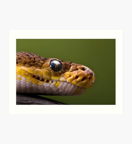 Timor Python Art Print