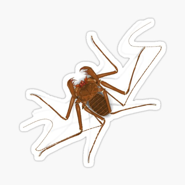 Amblypygi - Charinus israelensis - whip spider - tailless whip scorpion Sticker