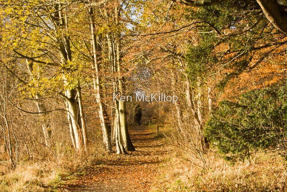 autumn lane by Ken McKillop