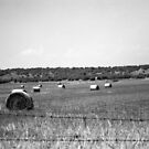 Haybales by rachn