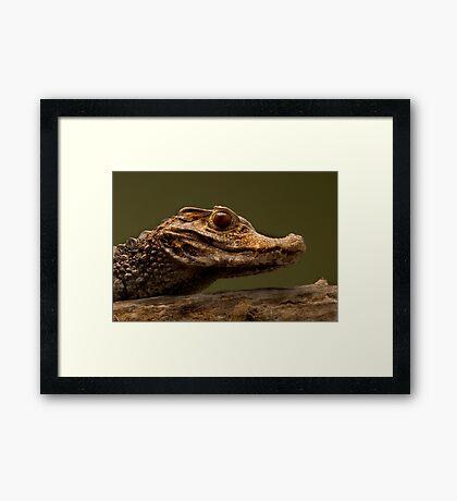 Dwarf Caiman Framed Print