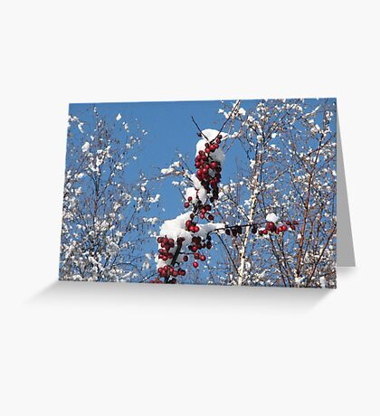 Apples and Snow Greeting Card