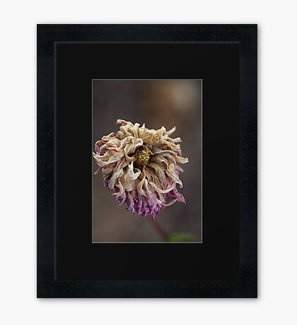 Beauty Beyond Framed Print