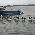 Pelicans by Beetlebug