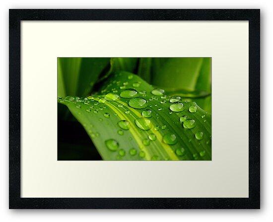 The Colour of Rain.. by Janine  Hewlett