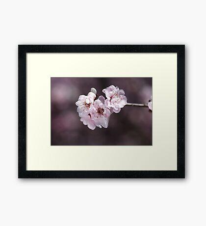 Over a Blossom Cloud Framed Print