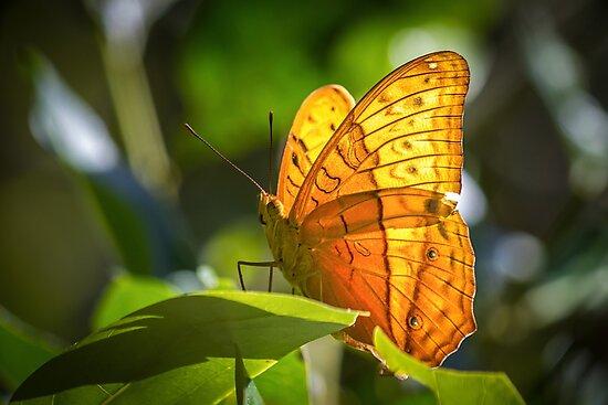 Orange Butterfly by Jola Martysz