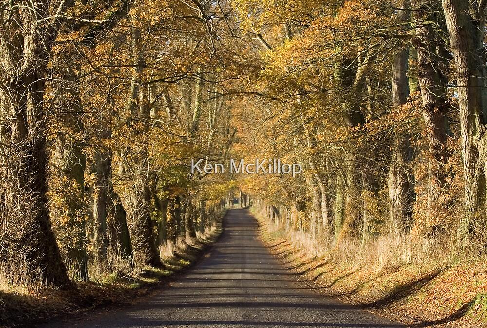 autumn avenue by Ken McKillop