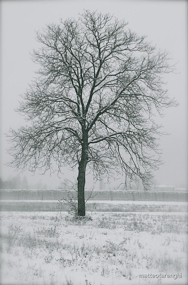 Winter tree by matteotarenghi