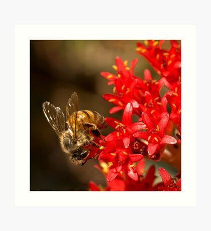 Biene auf scharlachroten Malerpinsel Kunstdruck