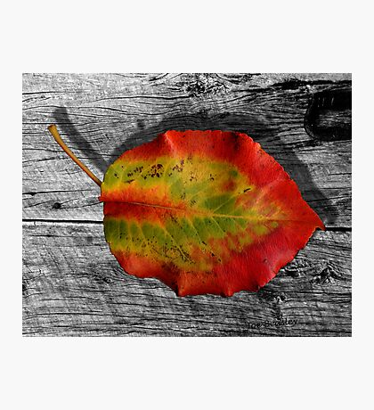 Leaf on Barnwood Photographic Print