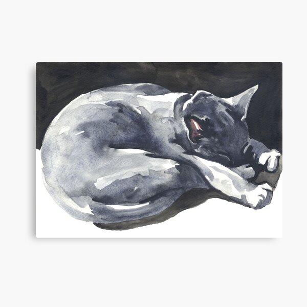 Cat Naps: The Superhero Canvas Print