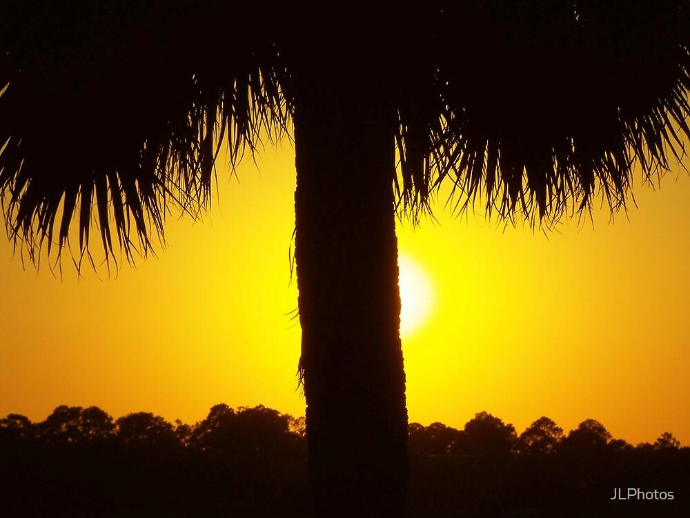 sunset palm by JLPhotos