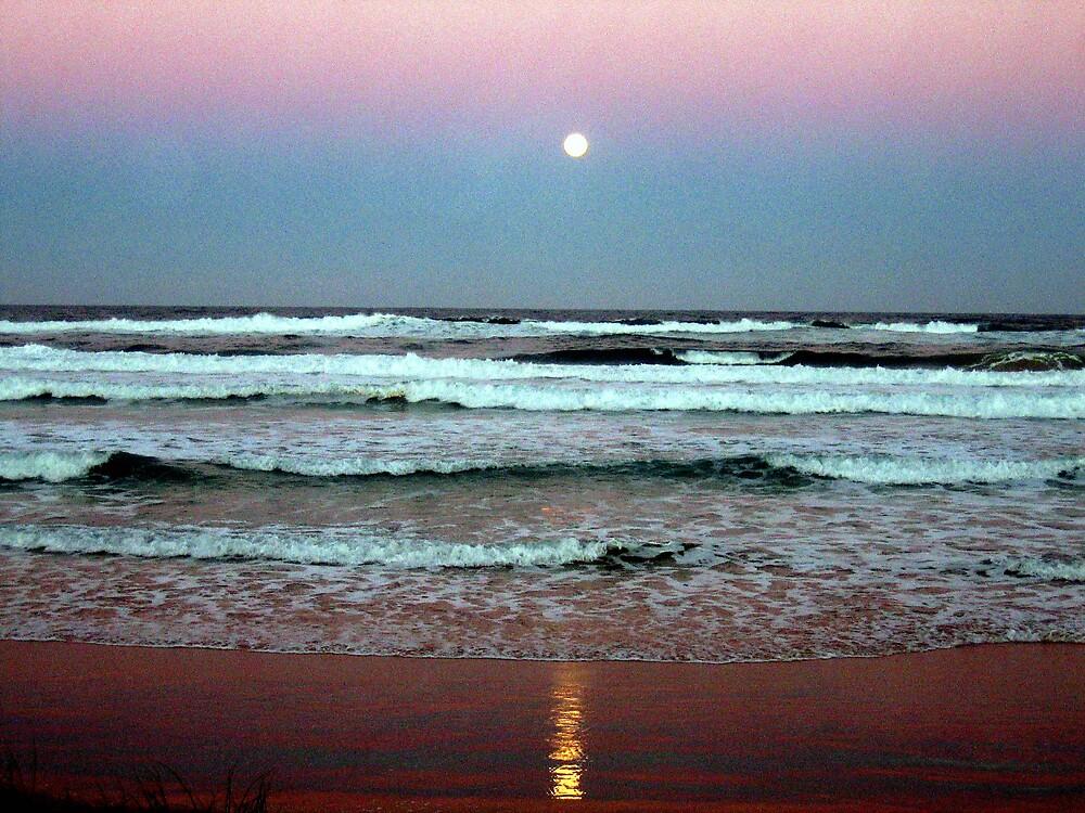 moonrise by david stevenson