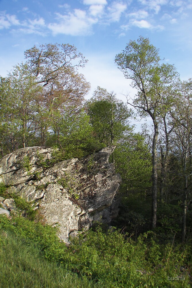 Beside a Rock by budrfli
