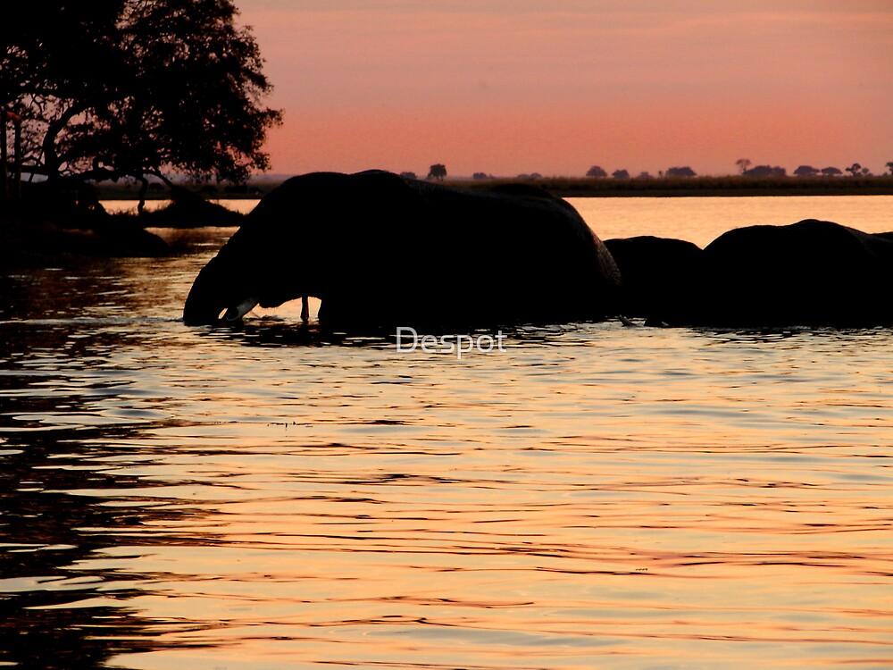 Sunset Elephants by Despot