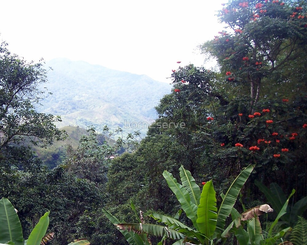 Tropical Mountain by born2serve