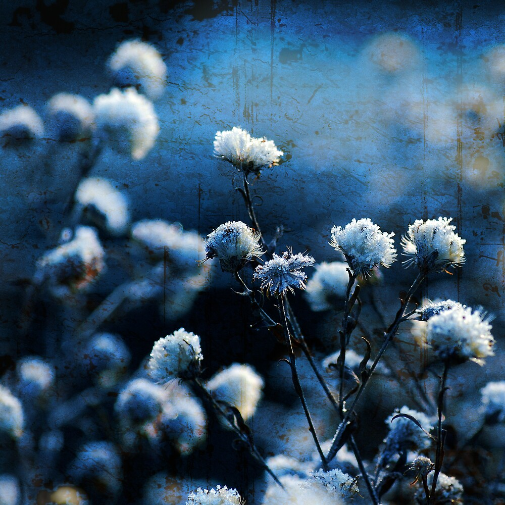 Blue Bokeh by Philippe Sainte-Laudy