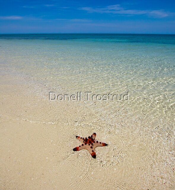 The Star and the Sea by Donell Trostrud