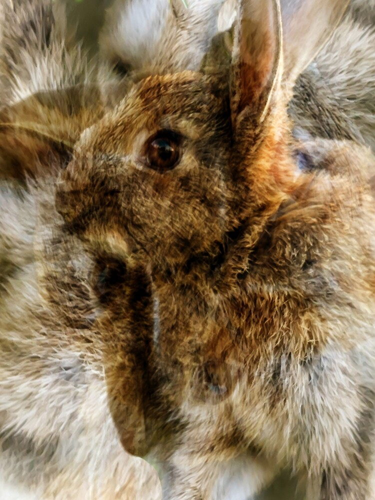 Designs Inspired By Nature: Wild Baby Rabbit by AliusImago
