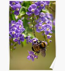 Save The Bumble Bee Poster
