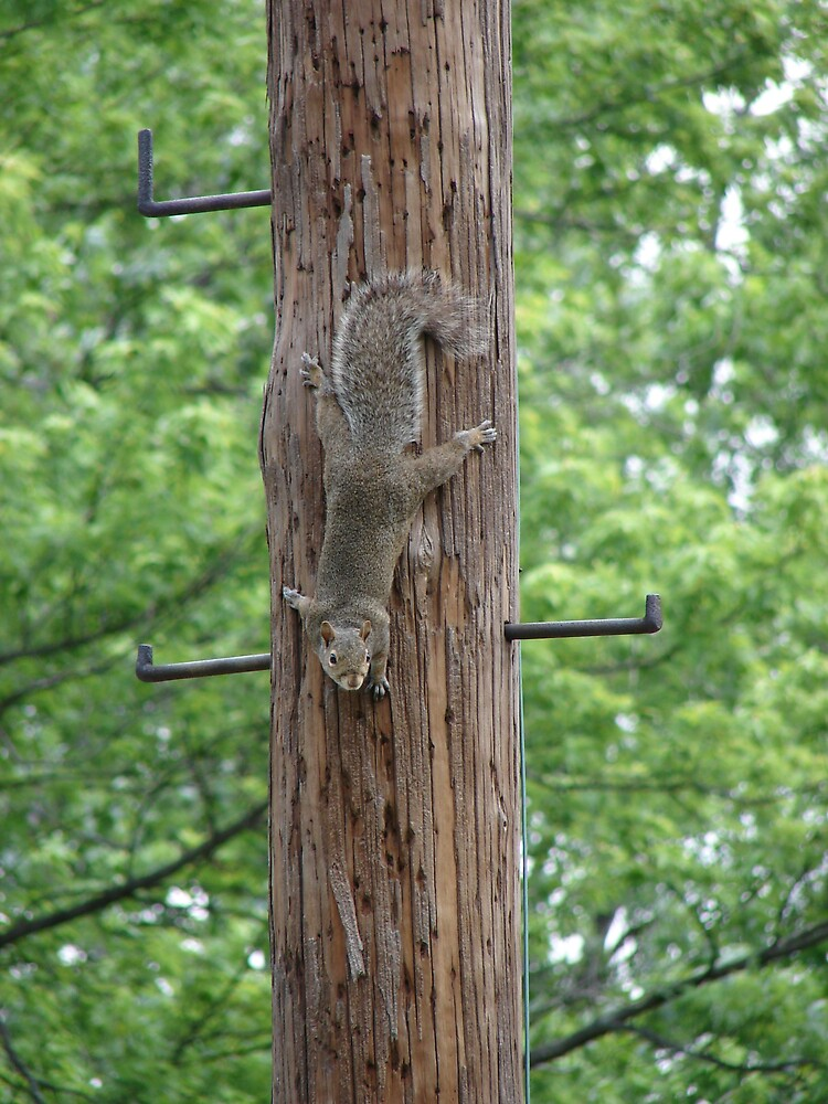 Pole Dancer by inventor