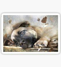 Abandoned Puppy Sticker