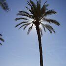 palm tree by sorkie