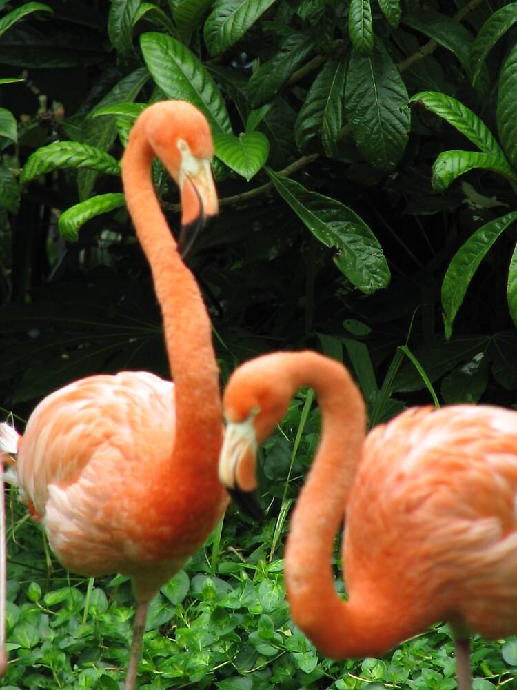 Flamingos by Lauren Carr