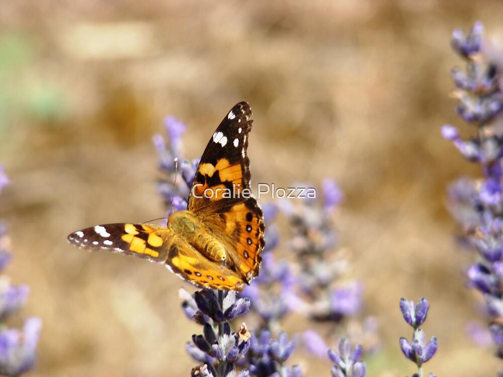 Butterfly Lavender by Coralie Plozza